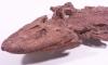 Палеонтологи смакуют находку - останки древней рыбы с четырьмя лапами