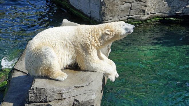 Ученые предсказывают гибель животных из-за климатической катастрофы в Баренцевом море