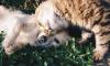 В Колпино откроютпункты приема корма для животных