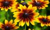 В Ленобласти на ковры и цветы власти потратят почти миллион