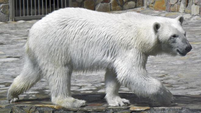 Ленинградский зоопарк ждет первых посетителей