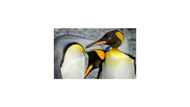 Берлинских пингвинов-геев выслали в Гамбург