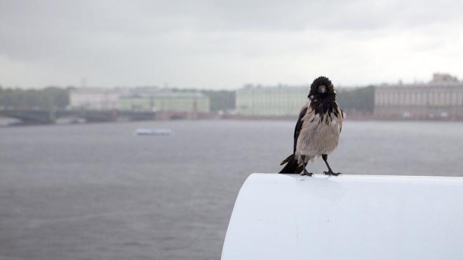 В Петербурге утром 15 января повысился уровень воды в Неве