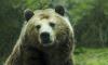 На Сахалине медведь убил сторожа
