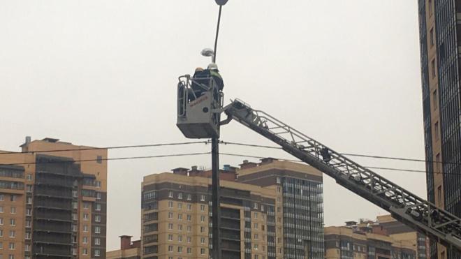 За вороной на фонарном столбе приехали спасатели