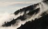 В Ленобалсти обещают туман и заморозки в пятницу