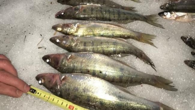 С начала года были оштрафованы почти 130 браконьеров за ловлю рыбы в Финском заливе