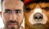 Райан Рейнолдс поссорился в Twitter с медвежонком Паддингтоном
