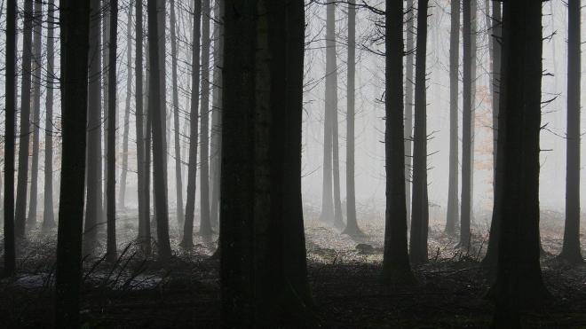 Появились подробности убийства 24-летней девушки в Тверской области