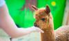В России в ближайшие месяцы примут закон о запрете контактных зоопарков