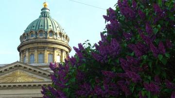 Петербург украсят кустами сирени, шиповника и розы