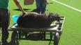 УЕФА запретила Шахтеру приносить в жертву баранов