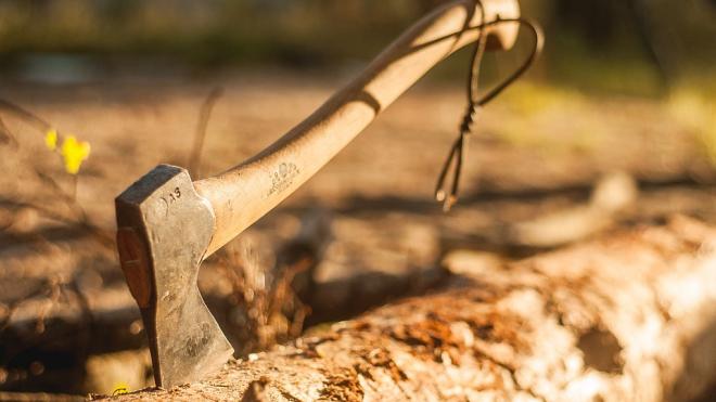 За восемь срубленных елок петербуржец может сесть на два года в колонию