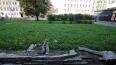 На Нарвском проспекте бассейн превратился в газон
