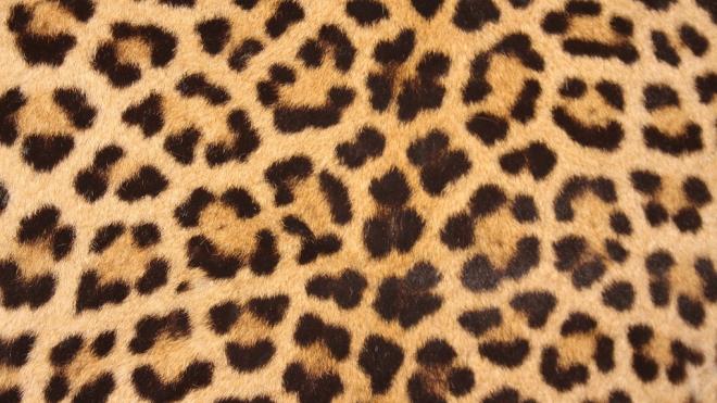 """Грабительница магазина в леопардовых лосинах оказалась """"грабителем"""""""