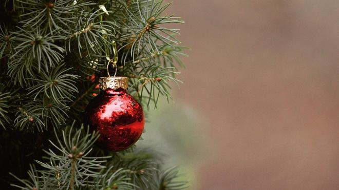 Горожане смогут сдать новогодние елки на переработку
