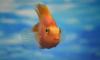 В США убийца аквариумной рыбки сел в тюрьму