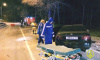 На Приморском шоссе из-за столкновения с деревом погиб водитель Mercedes