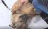 Петербургские депутаты хотят приравнять собак-помощников к поводырям