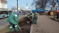 В центре Петербурга началась подготовка цветников ...