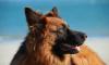 """Водоканал попросил ЗакС защитить служебных собак """"на пенсии"""""""