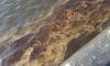 Петербуржцы обеспокоены пятнами на воде возле Морского порта