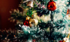 В Ленобласти рассказали, где можно срубить бесплатно новогоднюю ёлку