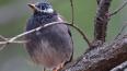 Не надо кормить пернатых: перелётные птицы возвращаются ...