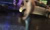 Танец голого извращенца на проезжей части у площади Ломоносова шокировал горожан