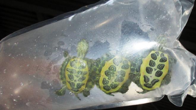 Десять лягушек и три черепахи отправили из Петербурга в Хабаровск