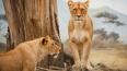 Снимки туристов помогают ученым следить за дикой природо...