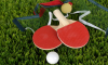Петербурженки завоевали 6 медалей на паралимпиаде по настольному теннису