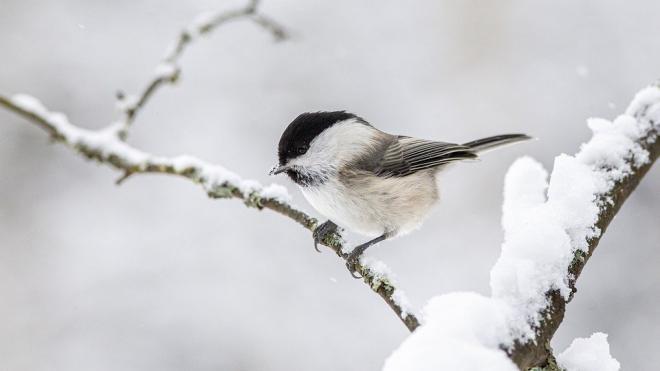 Петербуржцев предупредили о сильных морозах 19 февраля