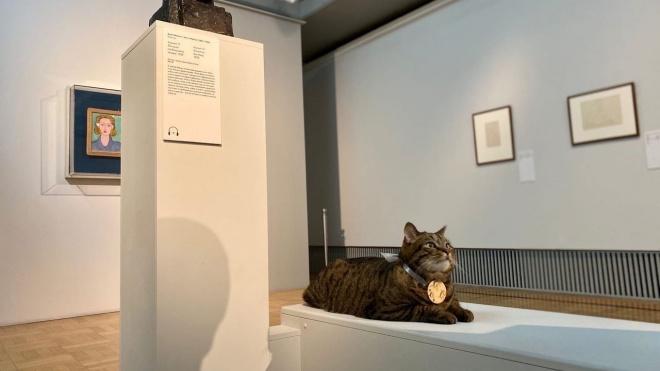 В Эрмитаже рассказали о самоизоляции музейных котов