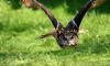 Спасенных в Петербурге сов выпустят на волю в орнитологическом парке около Сочи