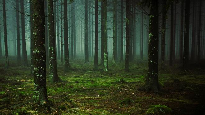 В Тульской области с понедельника ищут 13-летнюю девочку