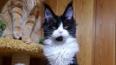 С выставки животных на Экспофоруме украли котенка ...