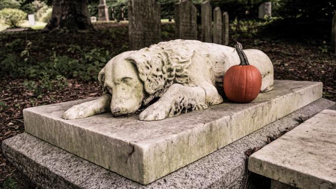 """""""Запах смерти""""больше не ощущается. ВПетербурге модернизировали крематорий для животных"""