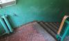Жильцы дома во Всеволожске пожаловались на некачественную санобработку