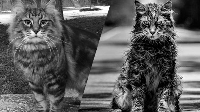 """Умер кот-звезда из """"Кладбища домашних животных"""""""