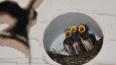 Россельхознадзор вернул Мексике 20 тонн птичьего корма: ...