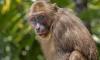 Петербуржца в Таиланде покусали дикие макаки