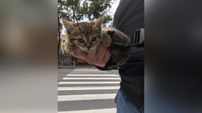 Неравнодушные горожане спасли котенка на улице Куйбышева