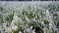 МЧС предупреждает жителей Ленобласти о ночных заморозках