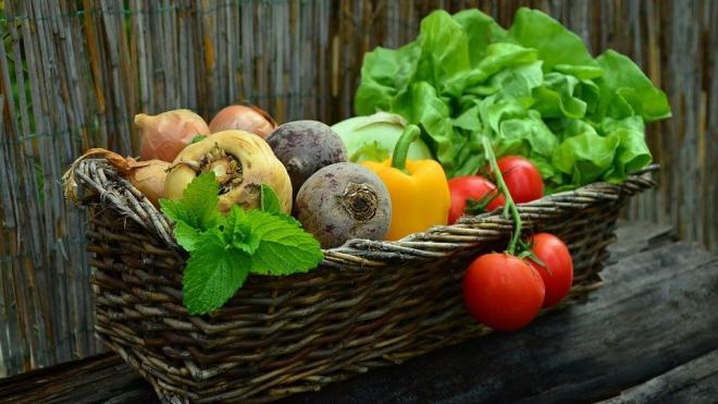 С начала года сбор овощей в Подмосковье увеличился на 30%