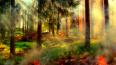 Количество лесных пожаров в Ленобласти увеличилось ...