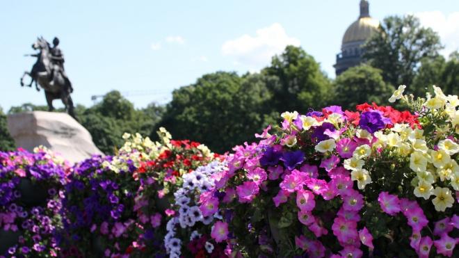 По Петербургу в честь Дня России проедут платформы цветов