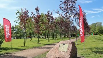 Представители культуры, науки и бизнеса высадили аллею в Пулковском парке