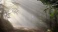 Спасатели предупредили о погодных угрозах в Ленобласти