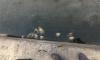 Петербуржцев напугала загадочная массовая гибель рыбы в Колпино